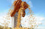 AGRICULTURA – Plano Safra 2017 será lançado dia 11 de julho no auditório da Prefeitura de Caxias